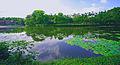 华南农业大学,美丽的洪泽湖b - panoramio.jpg