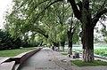 柳树 willows - panoramio.jpg