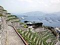 水ヶ浦段畑 - panoramio - daipresents (1).jpg