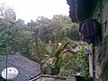 红花村 - panoramio (1).jpg