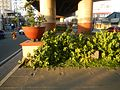 01273jfCircumferential Road 18 Bagong Ilog Pasig Boulevard Flyover Vargas Centennial Bridgefvf.jpg