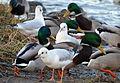 02014.12 Die Vögel im Winter am San..JPG