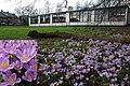 12 Februari 2016. Spring has begun^ The primairy school at the Rozendaalse road Angerenstein - panoramio.jpg
