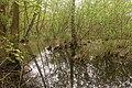 15-05-09-Biosphärenreservat-Schorfheide-Chorin-Totalreservat-Plagefenn-DSCF5565-RalfR.jpg
