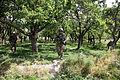 173rd, ANA commanders visit troops in Logar province DVIDS654705.jpg