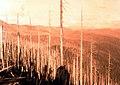 1934. Fire-killed Douglas-fir in high country, 32 years after the 1902 Yacolt Burn. Yacolt, Washington. (40712596111).jpg