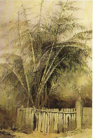 Bronte House - Painting of giant bamboo at Bronte House by Georgiana Lowe