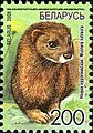 2008. Stamp of Belarus 10-2008-06-10-norka.jpg