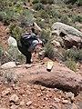 2008 Figure 6. Desert tortoise monitoring (3 photos) (76a3c6db-ca1a-4695-a035-089c6ba97b75).jpg