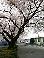 2011年春 富士重工診療所付近 - panoramio.jpg