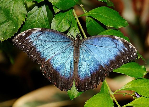 2011-08-08 15-00-17-papillon-hunawihr.jpg