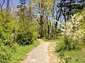 2013-05-05 13 33 17 View north along the Long Path in Palisades Interstate Park.JPG