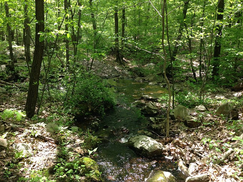 File:2013-05-12 12 46 27 Stream along the Wanaque Ridge Trail in Ramapo Mountain State Forest.JPG