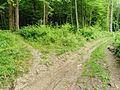 2013-06-26 21-16-58-forest.jpg