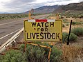2014-08-11 12 42 27 Watch for Livestock sign along southbound Nevada State Route 892 (Strawberry Road) about 23.3 miles north of U.S. Route 50 in Strawberry, Nevada.JPG