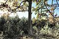 20141019-przemecki-park-krajobrazowy-buczyna-las-solna-gora-a.jpg