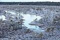 20151122-12(Lielais Ķemeru tīrelis).jpg