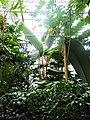 2018-06-18-bonn-meckenheimer-allee-169-botanischer-garten-regenwaldhaus-04.jpg