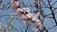 2018 Titan Park Spring (10).jpg