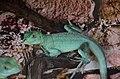 2019. Крокодиловый каньон в Ейске 087.jpg