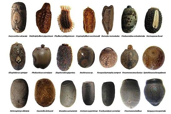 Huevo de insecto - Wikipedia, la enciclopedia libre