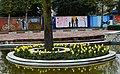 3424176 آستارا میزبان گل های لاله.jpg