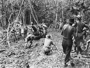 2/1st Pioneer Battalion (Australia) - Troops from the 2/1st Pioneers assist 14th Field Regiment gunners to move a 25-pdr gun up the Kokoda Track, September 1942