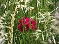 A Flower in my Garden 1.jpg