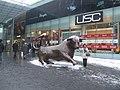 A bull for all seasons - geograph.org.uk - 1144633.jpg