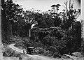 A car and a man on a road amid New Zealand native bush (AM 77045-1).jpg
