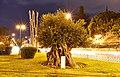 A fifteen centuries old, olive tree in Athens.jpg
