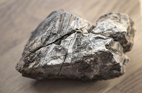 A piece of petrified wood.jpg