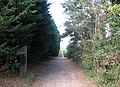 A shaded lane - geograph.org.uk - 1538077.jpg