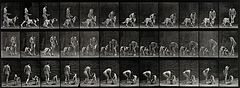 A woman feeding a dog. Photogravure after Eadweard Muybridge Wellcome V0048716.jpg