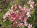 Ab plant 1554.jpg