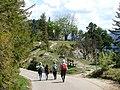 Abstieg vom Falkenstein - panoramio.jpg