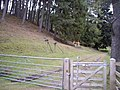 Access to Speyside Way - geograph.org.uk - 1545152.jpg