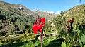 Achirana del Inca en Casa Ecologica Carash - panoramio.jpg