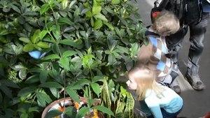 File:Activité Papillons en Liberté - Jardin botanique de Montréal.ogv