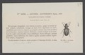 Agonoderus - Print - Iconographia Zoologica - Special Collections University of Amsterdam - UBAINV0274 011 03 0004.tif