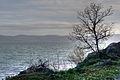 Albero sul lago (320582170).jpg