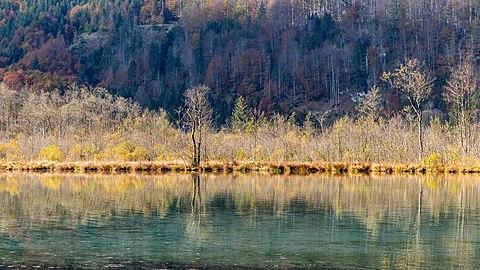 Almsee Westufer Verlandungszone-4142.jpg
