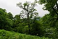 Alone in the Ghale-RoodKhan forest.jpg