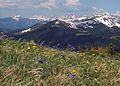 Alpine tundra Copper Mountain Colorado.jpg