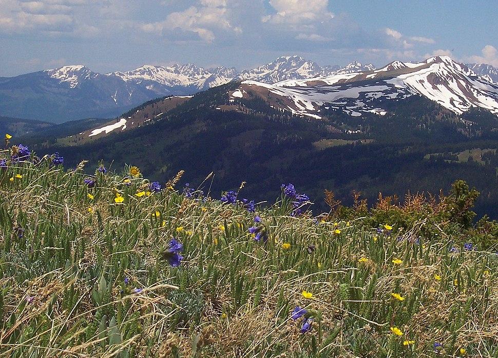 Alpine tundra Copper Mountain Colorado
