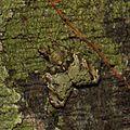 Amazing camouflage! (16434207678).jpg