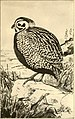 American game-bird shooting (1910) (14569005097).jpg