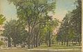 Amherst Common.jpg