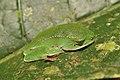 Amphibians (14976250514).jpg