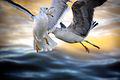 Angels in fury (2313644502).jpg